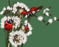 spring printemps frühling primavera весна wiosna  dandelion ladybug insect garden jardin deco tube flower fleur marienkäfer coccinelle