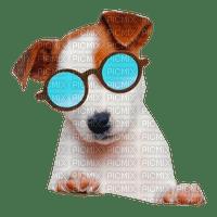 chien été lunette