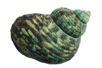 Sea snail shells mer coquilles-tube-decoration-vert-green deco_Blue DREAM 70