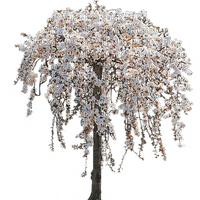 fleurs fleur arbre  printemps-été gif plantes_flowers flower tree  spring Summer gif plants_tube
