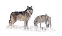 wolves - Nitsa 1