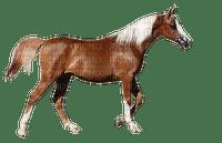 häst---horse