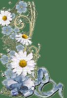 daisy flower border spring marguerite fleur bordure printemps