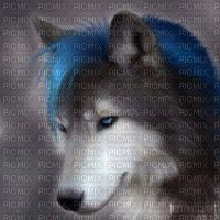 Blauwe Wolf