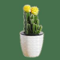 plant cactus pot, vase, sunshine3