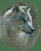 wolf - varg