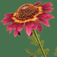 flower red fleur rouge