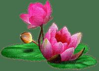 chantalmi fleur rose nénuphar