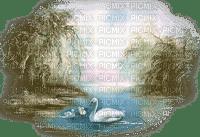 swans pond cygne lac