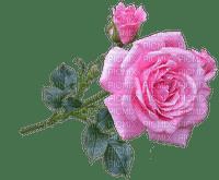Trandafir 22