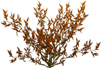 buske---Bush