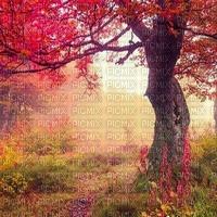 FOREST BG forêt fond