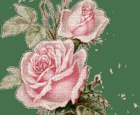 vintage pink rose flower, sunshine3