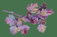 leaves violet feuille  deco