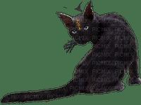 dolceluna black cat
