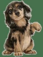 cute puppy  petit chiot