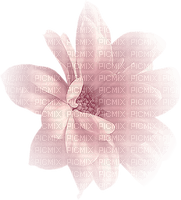 Minou52-valentine- blomma-ljusrosa