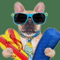dog hund chien fun animal   sea beach plage tube    strand summer ete deco