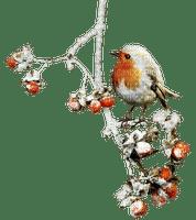 Winter bird branch_hiver volaille branche