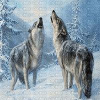 wolf winter transparent bg loup hiver fond
