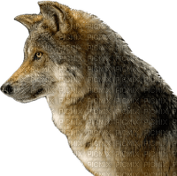 Salomelinda loup !