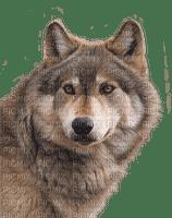 wolf katrin