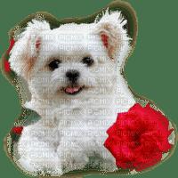 valentine valentin dog hund chien fleur