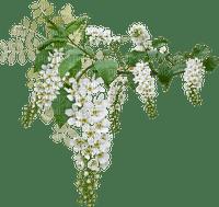 minou-white flowers-vita blommor