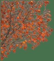 Automne.Autumn.Arbre.branch.Victoriabea