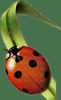 Kaz_Creations Ladybug-Ladybird