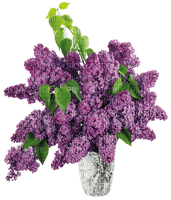 flowers_lilac