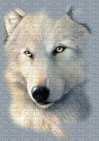 mon ami loup