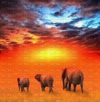 image encre paysage sunset Africa Afrique la nature ink or ivk le coucher du soleil Éléphants edited by me