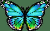Mariposa vidriera