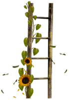 ladder sunflower deco  tournesol échelle