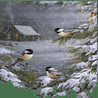 winter birds hiver oiseaux paysage