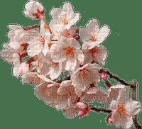fleurs de cerisier, printemps,tube,deko,Pelageya
