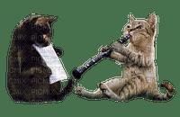 cat chat katze animal music  animaux tube mignon