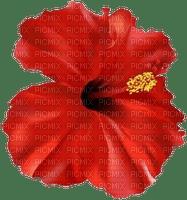 flower tahiti