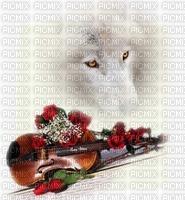 Loup Blanc !!