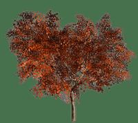 Arbre.Tree.Automne.Victoriabea