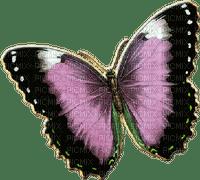 patricia87 papillon