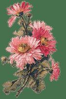 blommor--flowers--pink--rosa