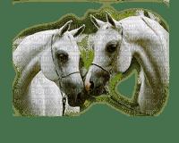 white horses cheval blanc