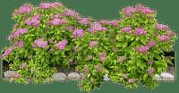bush spring flowers deco fleur printemps
