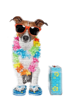 funny dog summer holiday wearing flip flops chien êtê