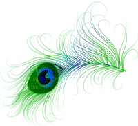 paon plumes PEACOCK  feather