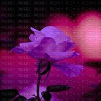roses,fond,tube, Pelageya