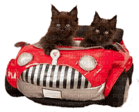 cat cats car - chat chats voiture - paintinglounge