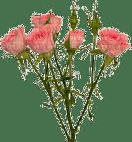roses.tube,deco,garden Pelageya